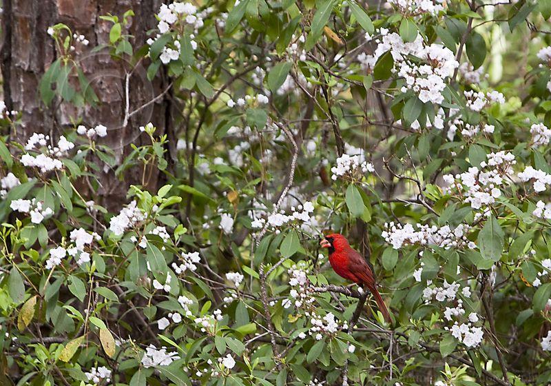 19 cardinal_MG_0735