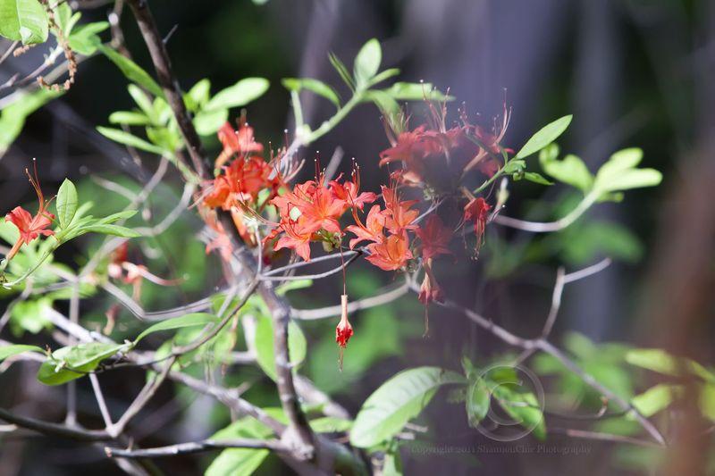 20 orange flower_MG_0739