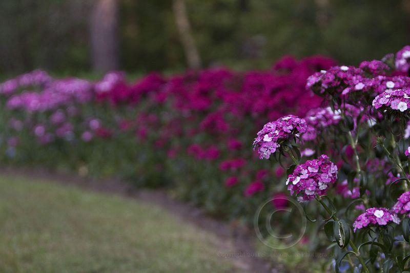 40 flowers_MG_0868